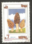 Sellos del Mundo : Asia : Nepal : 551 - champiñón morchella cónica