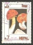 Sellos del Mundo : Asia : Nepal : 550 - champiñón amanita caesaria