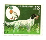 Stamps Asia - Azerbaijan -  FLORA Y FAUNA