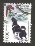 Sellos del Mundo : Europa : Bielorrusia : 721 - Perro de raza,  Laika ruso-europeo