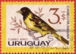 Stamps : America : Uruguay :  Cabecita Negra
