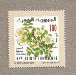 Sellos de Africa - Túnez -  Escaramujo