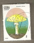 Sellos de America - Cuba -  Setas