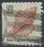 Sellos de America - Estados Unidos -  Caracola de mar
