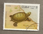 Stamps Cuba -  Tortugas