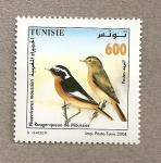 Sellos de Africa - Túnez -  Pájaro cola roja de Moussier
