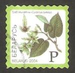 Stamps : Europe : Belarus :  500 - flor charme commun
