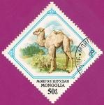 Stamps Mongolia -  Camello