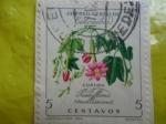 Sellos de America - Colombia -  CURUBA-Passiflora Mollssima