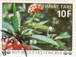 Stamps Comoros -  flores