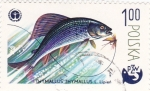 Stamps Poland -  pesca