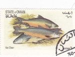 Stamps Oman -  peces