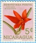 Sellos de America - Nicaragua -  Hexisia Bidentata