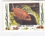 Sellos de Asia - Emiratos Árabes Unidos -  peces tropicales