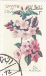 Stamps Asia - Oman -  flores