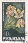 Stamps : Europe : Romania :  flores
