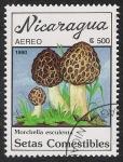 Sellos del Mundo : America : Nicaragua : SETAS-HONGOS: 1.201.011,01-Morchella esculenta -Dm.990.28-Y&T.A1314-Mch.3001