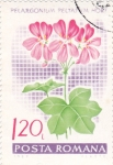 Stamps Romania -  flores