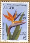Stamps Africa - Algeria -  STRELITIZIA REGINAE