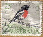 Stamps Oceania - Australia -  SCARLES ROBIN
