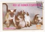 Sellos de Africa - Guinea Ecuatorial -  gata siamesa con crias