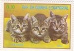 Stamps Equatorial Guinea -  gatos europeos