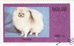Sellos del Mundo : Asia : Nagaland : perros-Pomeranian