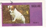 Stamps Nagaland -  perros-Jack Rusell Terrier