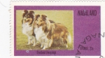 Stamps Asia - Nagaland -  perros-Shetland Sheepdogs
