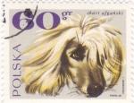 Sellos de Europa - Polonia -  perros-Afgano