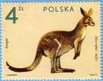 Stamps Poland -  Kangur