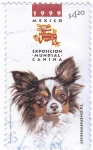 Stamps Mexico -  Exposicion mundial canina-chihuahueño