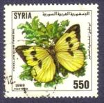 Stamps : Asia : Syria :  La pequeña mariposa blanca