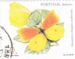 Sellos de Oceania - Portugal -  Madeira-mariposa