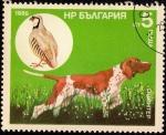 Sellos de Europa - Bulgaria -  Perros de Caza