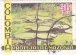 Stamps Colombia -  proteja la amazonia