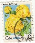 Stamps Cuba -  Rosa Sulfurea