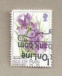 Stamps Europe - Isle of Man -  Iris barbudo