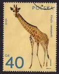 Stamps Poland -  Jirafa