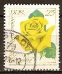 Sellos de Europa - Alemania -  Exposición Internacional de Rosas,1972 en DDR.Kopernicker Sommer Izetka(Rosa amarilla).