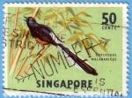 Stamps : Asia : Singapore :  Copsychus Halabaricus