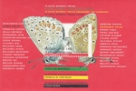 Stamps : Europe : Netherlands :  Mariposas