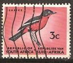 Sellos de Africa - Sudáfrica -  Shrike-El Alcaudón
