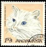 Sellos de Europa - Hungría -  Gato angora blanco. 1968.