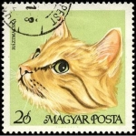 Stamps Hungary -  Gato doméstico. 1968.