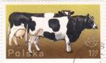 Stamps Poland -  vacas
