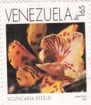 Sellos de America - Venezuela -  scuticaria steelei
