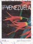Sellos de America - Venezuela -  ada aurantiaca