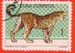 Stamps : America : Cuba :  Zoologico de la Habana - Leopardo