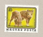 Stamps Hungary -  Jabalí